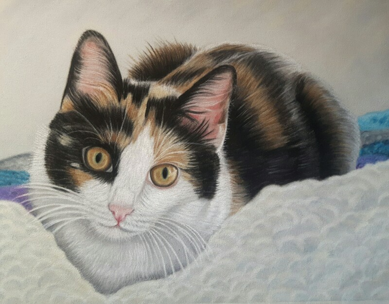 Portrait of Holly the Kitten