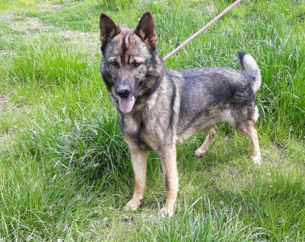 Skibbereen Animal Sanctuary & Rescue Centre - Toby - Copper 1