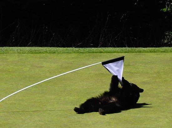 Fairmont Chateau Whistler Golf Course (8)