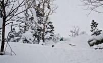 Morgan sous la neige