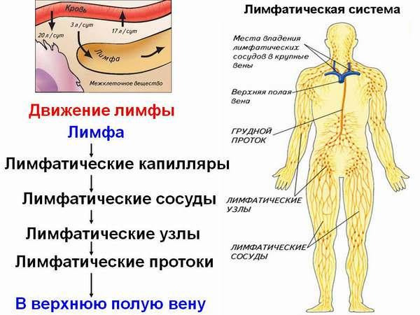 Cum este drenajul limfatic al extremităților inferioare cu varice
