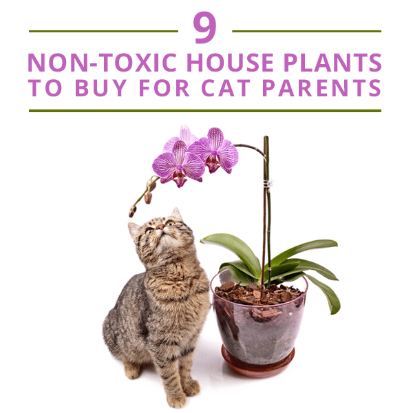 Common House Plants Not Poisonous To Cats
