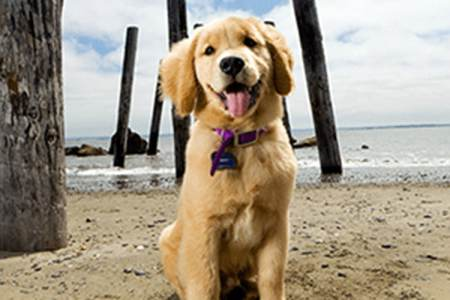 How to Choose the Right Pet for Your Lifestyle