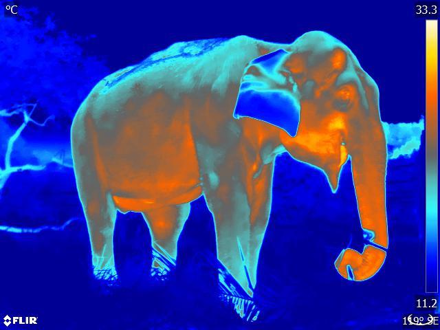 Skins IR - Veterinary/Conservation - Elephant
