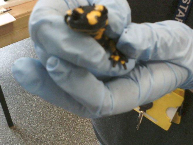 Skins - Conservation - Fire Lizard