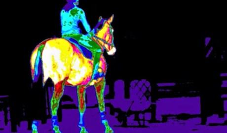 Skins IR - Veterinary -Equine