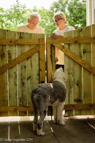 2016_07_30_backyard birding_back yard buffet_0012