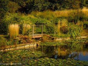 Pond in the Butterfly Garden