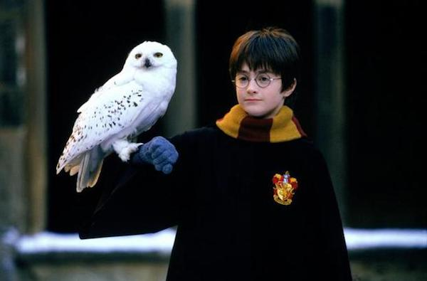 20 Random Things About Harry Potter (Celebrating the 20th Anniversary Of the First Potter Book)   Skip The Flip