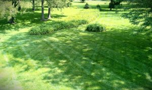 lawn-landscape-contractor-fertilizer-fertilize-Kansas-City