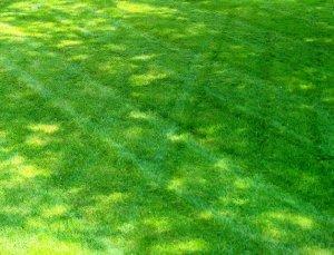 Raymore, SK Lawn Care, Lawn, Landscape, Lawn Care Service, Landscape Service