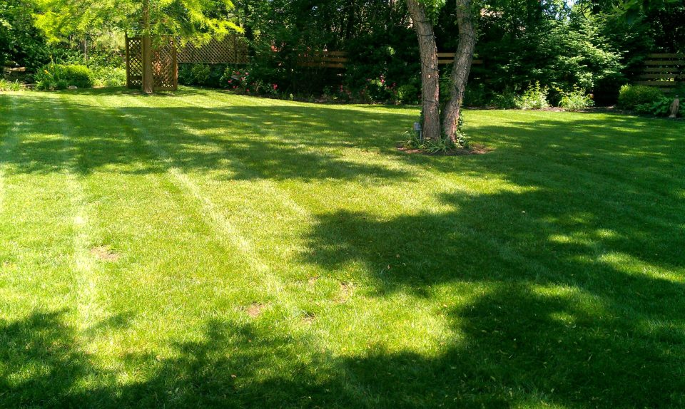 Mission Hills, Lawn, Landscape, Lawncare, Mowing, Fertilizing, Weed Control
