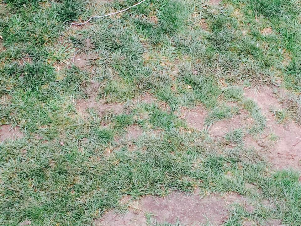 overseed-aerate-verticut-Overland-Park-Kansas-City-Leawood-lawn-care