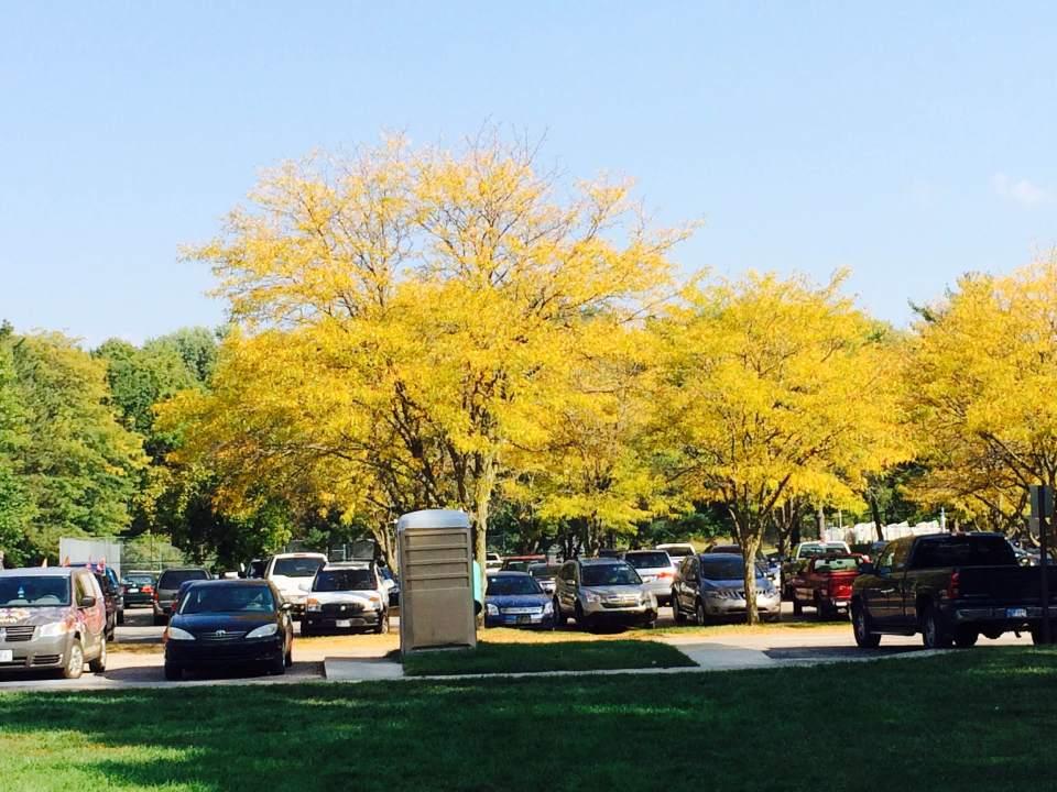 leaf-removal-Overland-Park-Leawood-Kansas-City