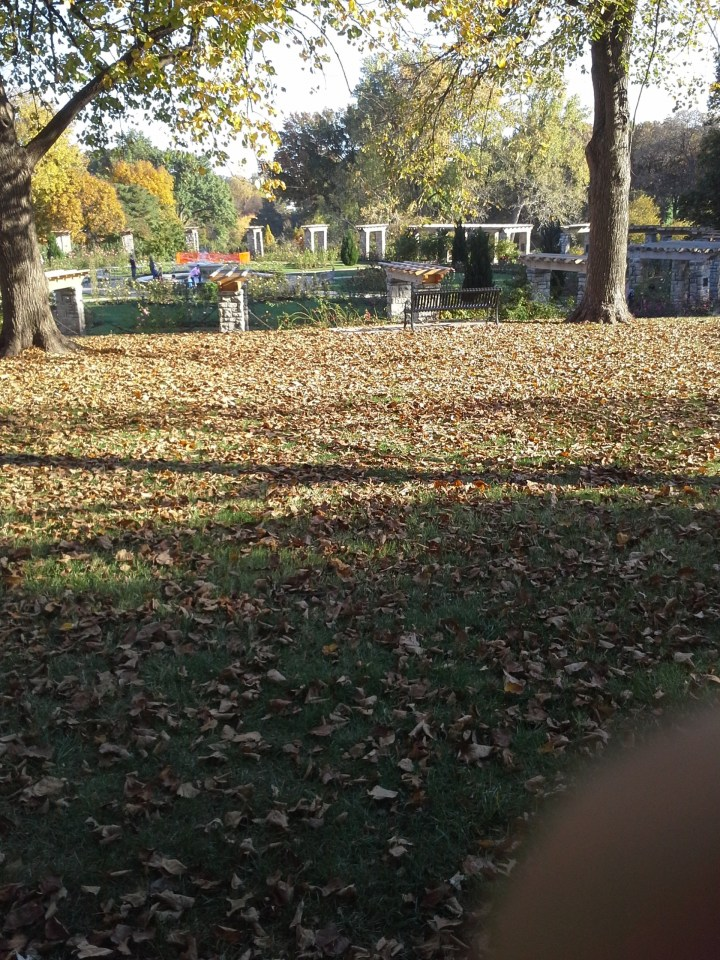 leaf-removal-service-Overland-Park-Leawood-fall-cleanup