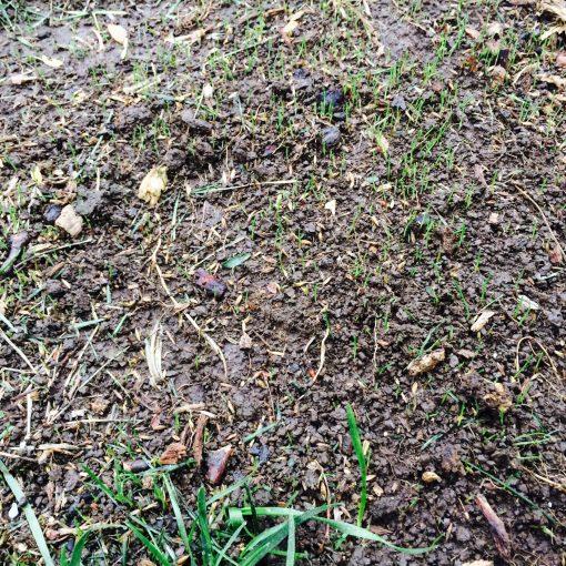 leaf-removal-Overland-Park-remove-leaves-Kansas-City