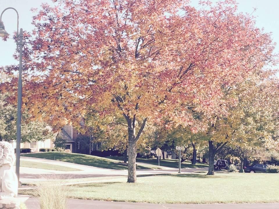 leaf-removal-service-Overland-Park-Kansas-City-Leawood-lawn-care