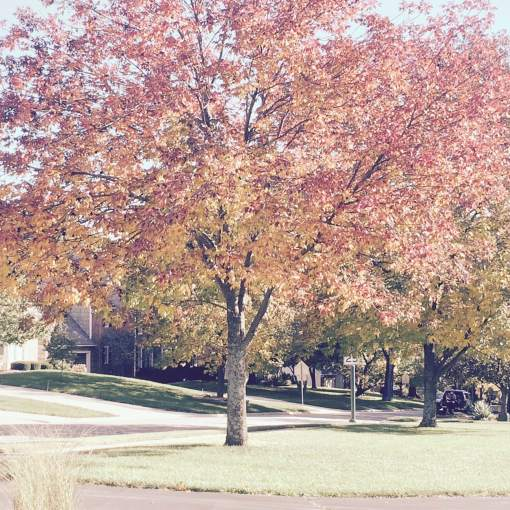 leaf-removal-service-Overland-Park-Kansas-City-Leawood-lawn-care