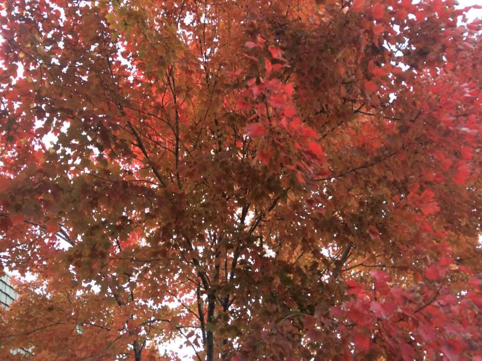 leaf-removal-Kansas-City-Overland-Park-remove-leaves