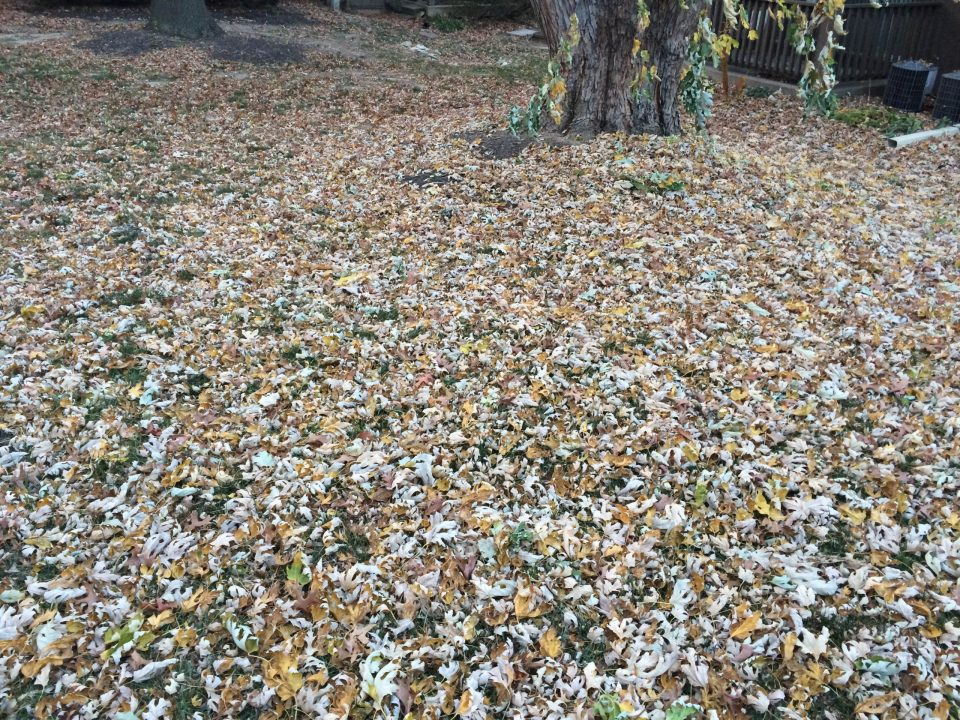 leaf-removal-Kansas-City-Overland-Park