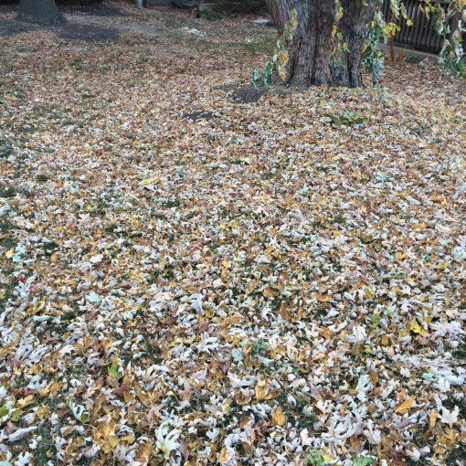 leaf-removal-Kansas-City-Overland-Park