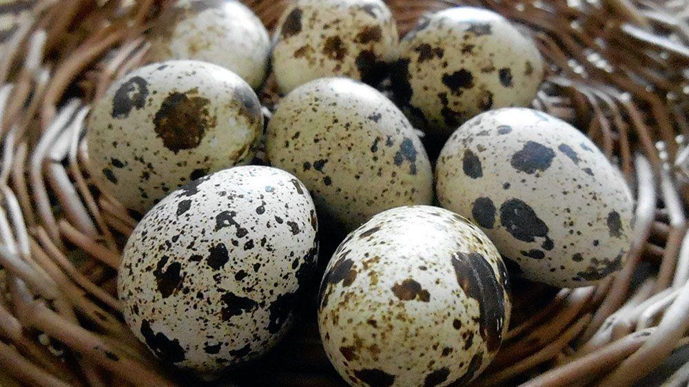 перепелиные яйца вкрутую