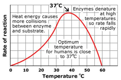 Effect of Temperature on the Rate of Reaction