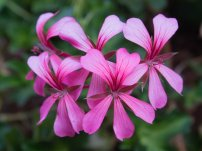 Macro up on tiny flowers.