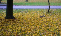 A squirrel among the yellow leaves