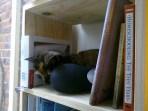 Funnyface sitting on the shelf...