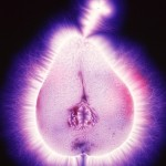 Kirlian photo, Pear