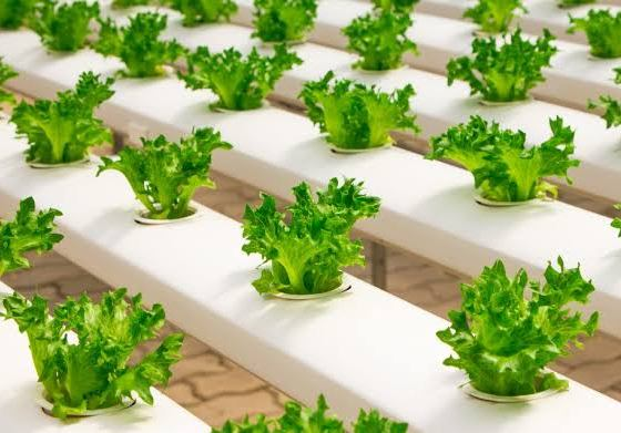 12 Plug-And-Play Home Hydroponics Systems
