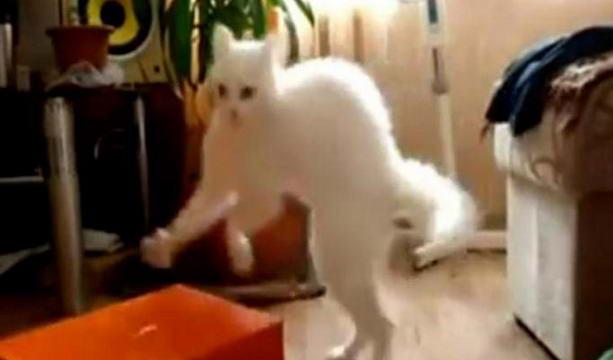 Причудливый кот
