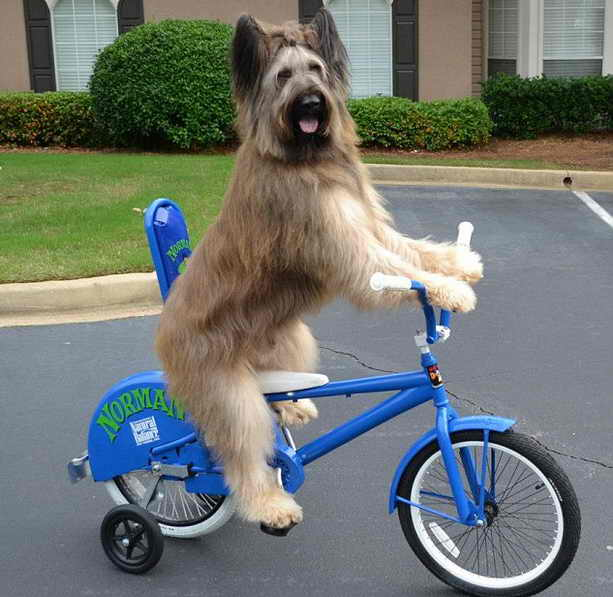 Велосипед у Нормана любимая игрушка