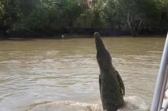 croc... nope got no more