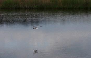 Hjälstaviken i Uppland är väl värt ett besök för den naturintresserade.