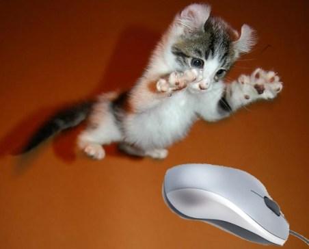 clickbait kitten