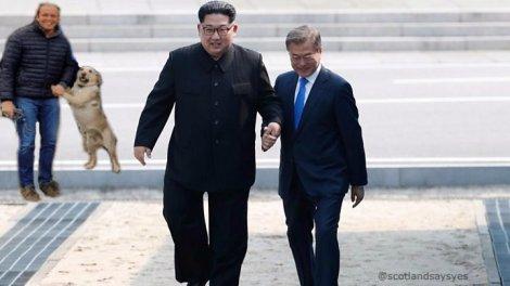 dog korea