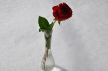 I recived a rose for Valentine's Day!