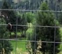 wren on fence