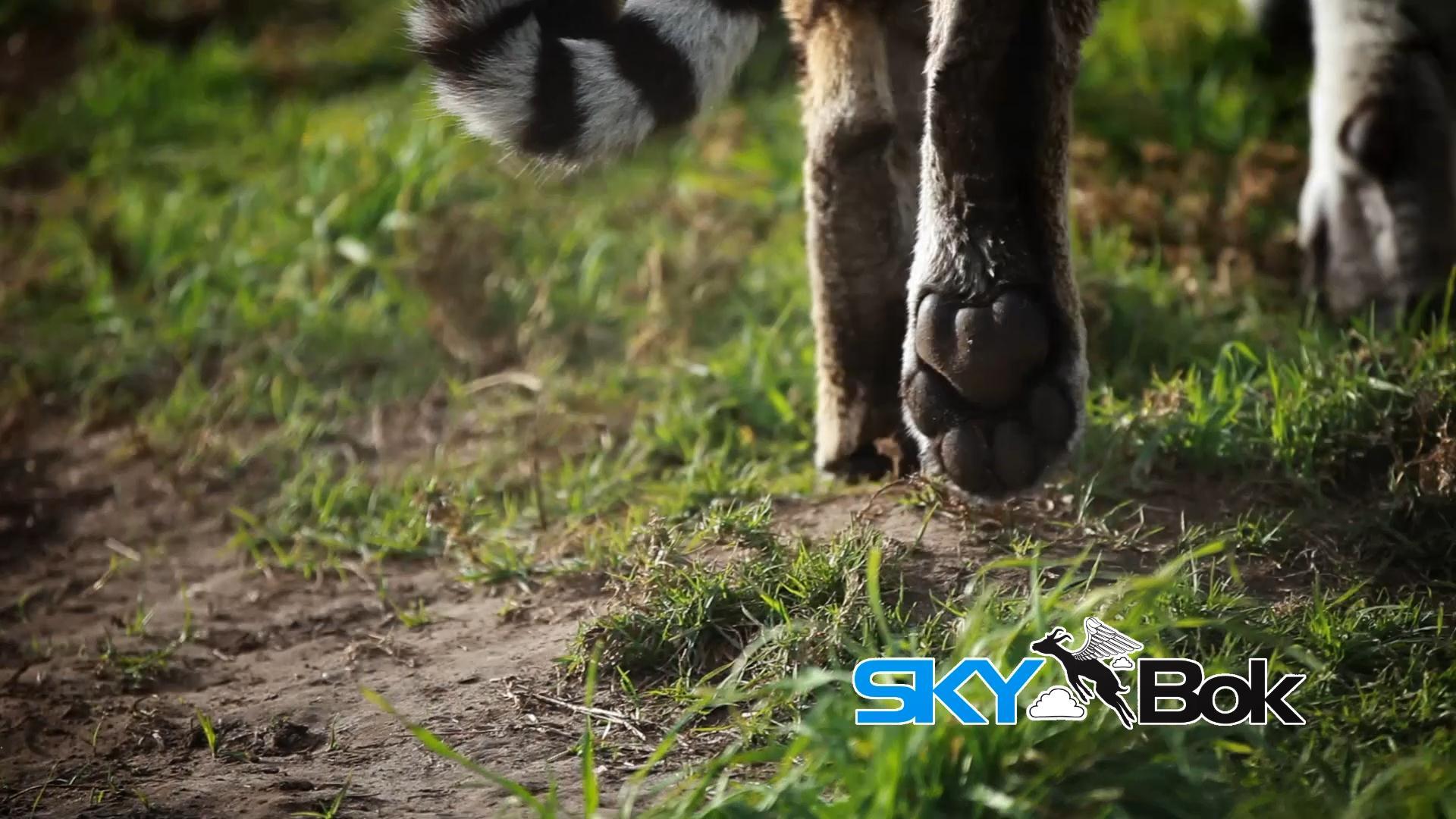 Seaview Lion Park Port Elizabeth Skybok Video Profiling South Africa