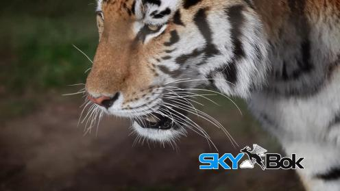 Wildlife Africa Skybok Video Profiling South Africa