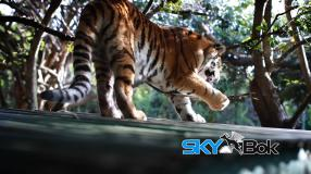 Seaview Lion Park Port Elizabeth Skybok Video Profiling South Africa