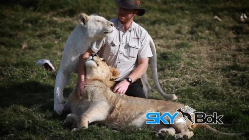 Seaview Lion Park Skybok Video Profiling South Africa