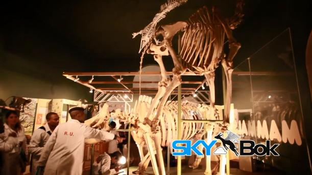 Skybok- Albany Museum (Grahamstown, South Africa).mp4_snapshot_00.18_[2014.03.03_14.23.44]