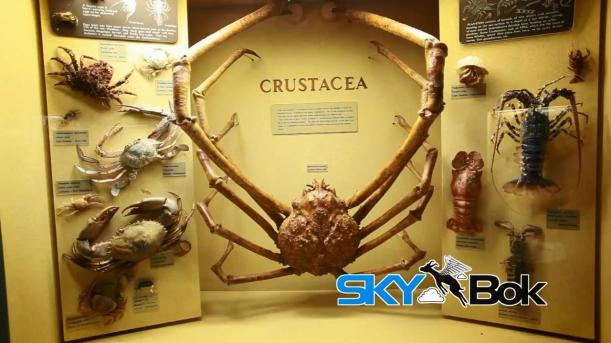 Skybok- Albany Museum (Grahamstown, South Africa).mp4_snapshot_01.05_[2014.03.03_14.25.10]