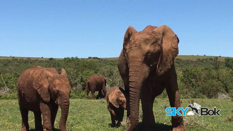 Skybok Films Addo Elephant National Park, South Africa