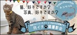 東京キャットガーディアン×PhotoCafe桐島ナオ 月イチ*猫撮影会