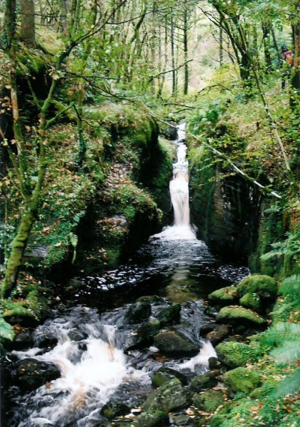 Welsh Beauty #3