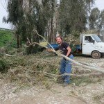 Clearing the Trees for Workaway